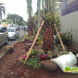 taman dengan pohon kurma